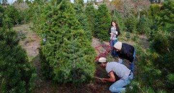 How To Book Your Order In Christmas Tree Farm