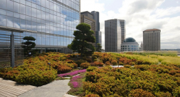 What you should know before investing in Green Roof?
