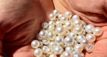 How to Start a Small-Scale Pearl Farming Business